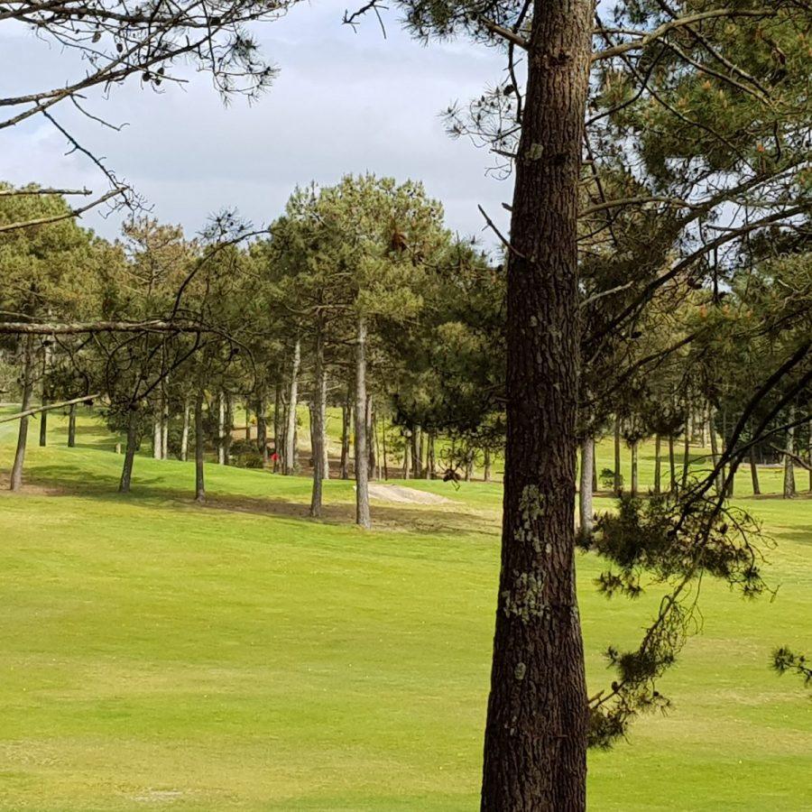 8 Golf vu 3